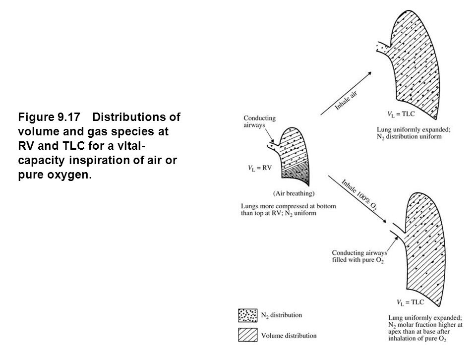 fig_09_17 Figure 9.17 Distributions of volume and gas species at RV and TLC for a vital-capacity inspiration of air or pure oxygen.