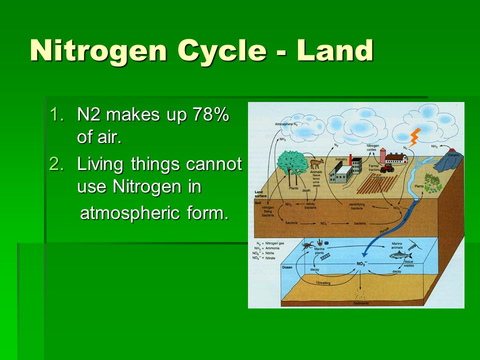 Nitrogen Cycle - Land N2 makes up 78% of air.