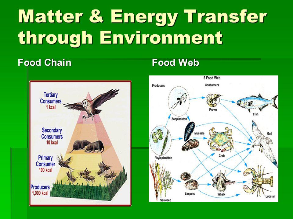 Matter & Energy Transfer through Environment