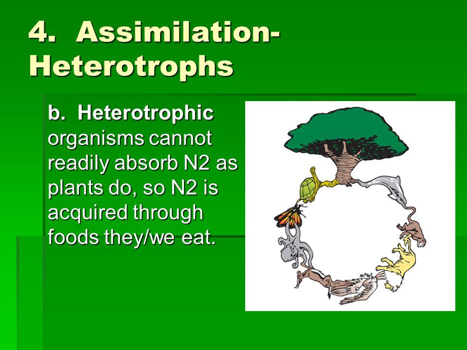 4. Assimilation-Heterotrophs