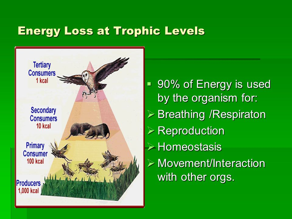 Energy Loss at Trophic Levels