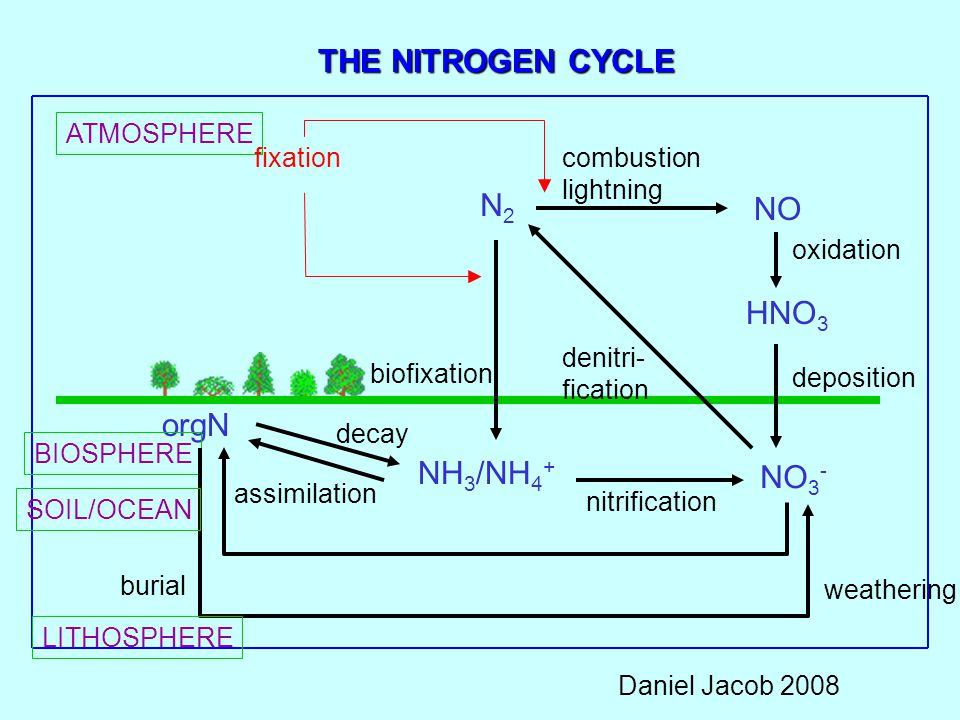 THE NITROGEN CYCLE N2 NO HNO3 orgN NH3/NH4+ NO3- ATMOSPHERE fixation