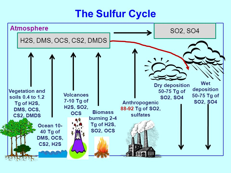 The Sulfur Cycle Atmosphere SO2, SO4 H2S, DMS, OCS, CS2, DMDS