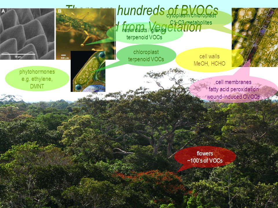 There are hundreds of BVOCs emitted from Vegetation