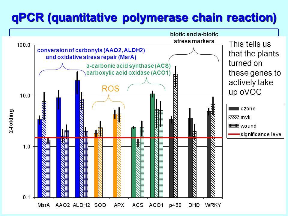 qPCR (quantitative polymerase chain reaction)