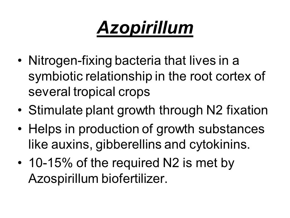 Azopirillum Nitrogen-fixing bacteria that lives in a symbiotic relationship in the root cortex of several tropical crops.