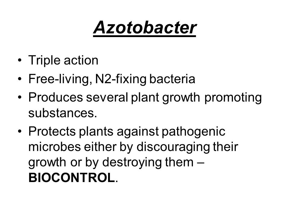 Azotobacter Triple action Free-living, N2-fixing bacteria