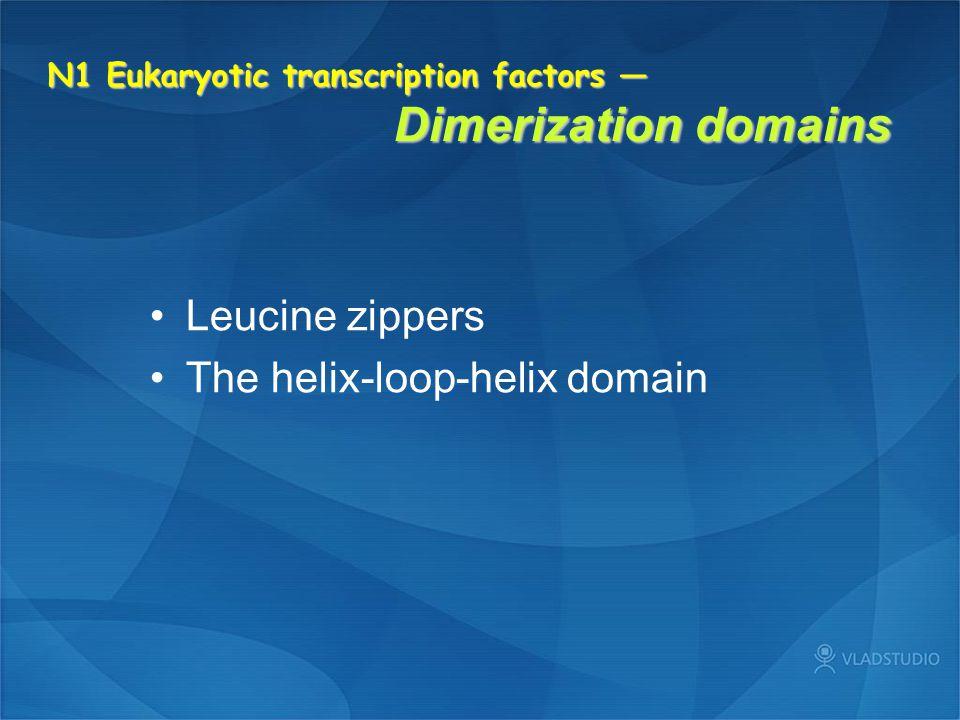 N1 Eukaryotic transcription factors — Dimerization domains