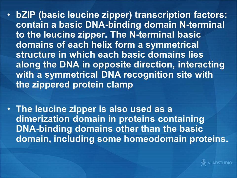 bZIP (basic leucine zipper) transcription factors: contain a basic DNA-binding domain N-terminal to the leucine zipper. The N-terminal basic domains of each helix form a symmetrical structure in which each basic domains lies along the DNA in opposite direction, interacting with a symmetrical DNA recognition site with the zippered protein clamp
