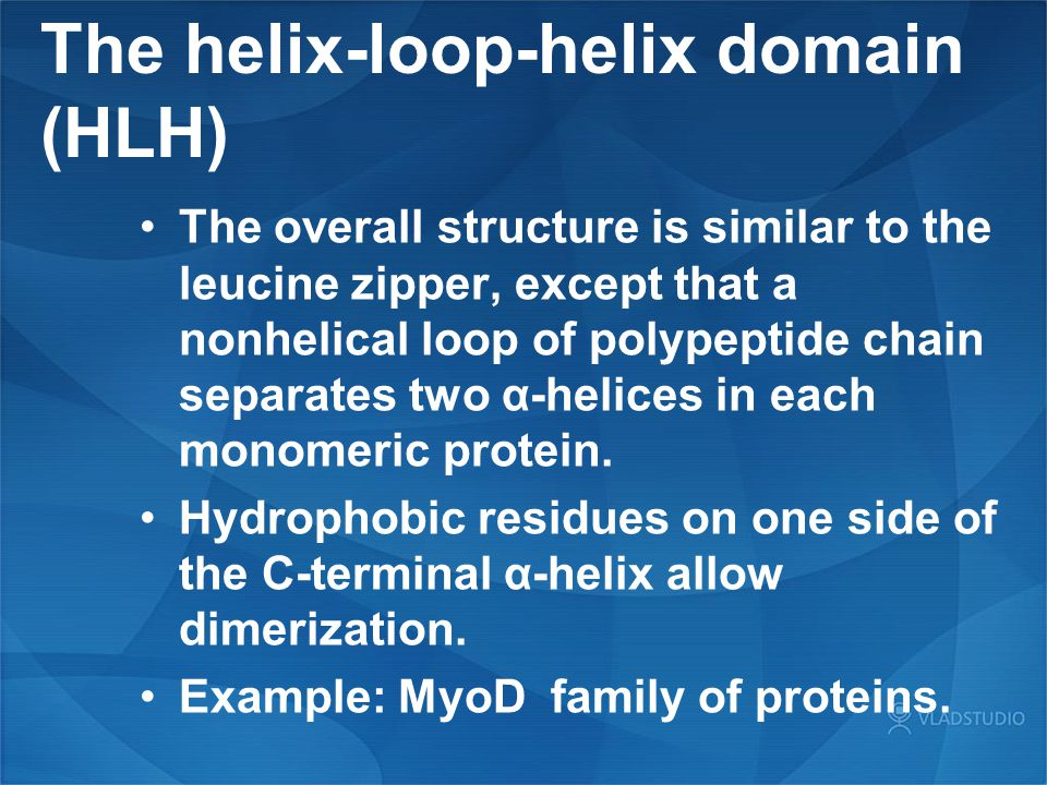 The helix-loop-helix domain (HLH)