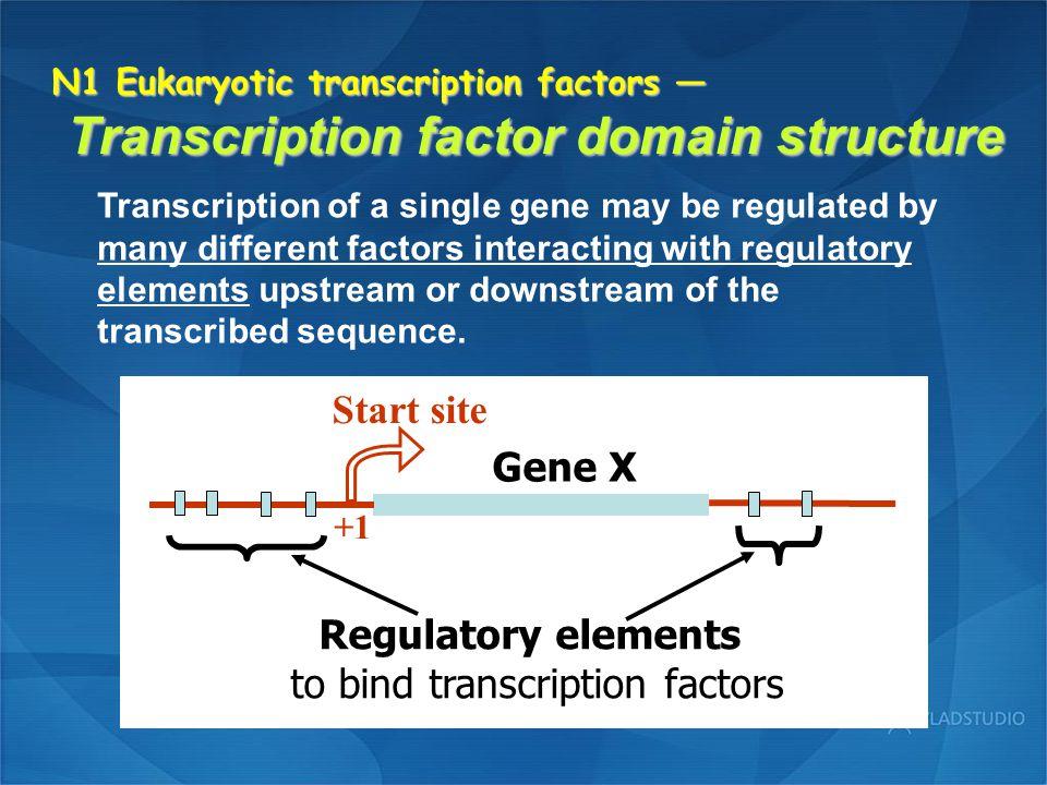 to bind transcription factors