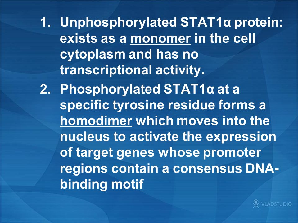 Unphosphorylated STAT1α protein: exists as a monomer in the cell cytoplasm and has no transcriptional activity.