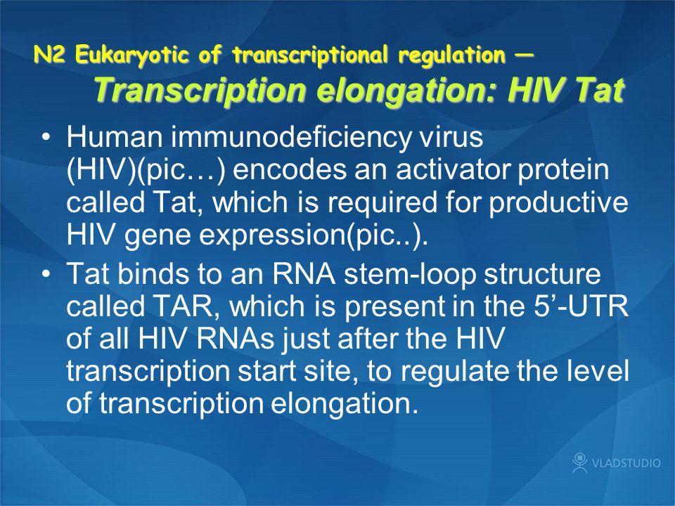 N2 Eukaryotic of transcriptional regulation — Transcription elongation: HIV Tat