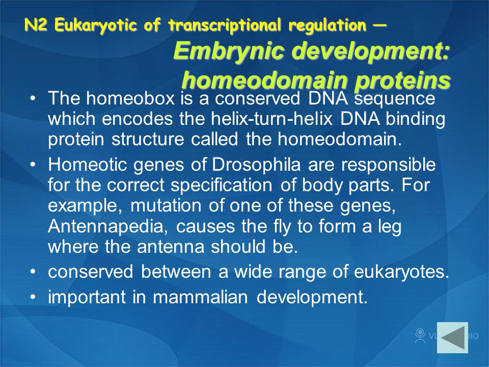 conserved between a wide range of eukaryotes.