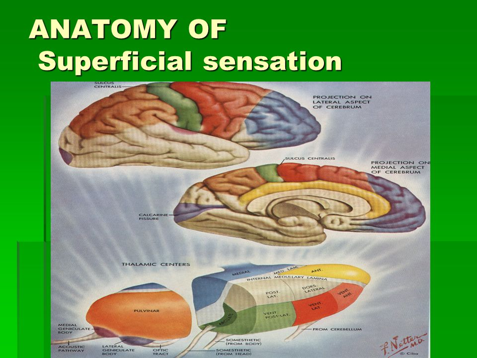 ANATOMY OF Superficial sensation