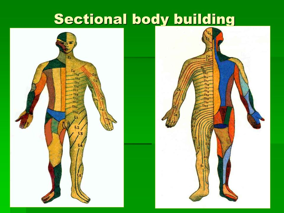 Sectional body building