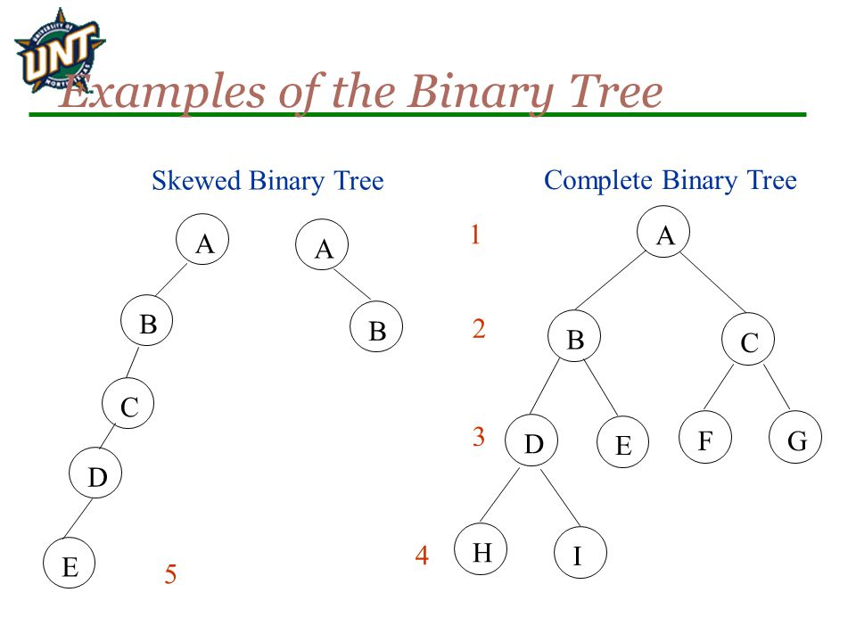 Examples of the Binary Tree