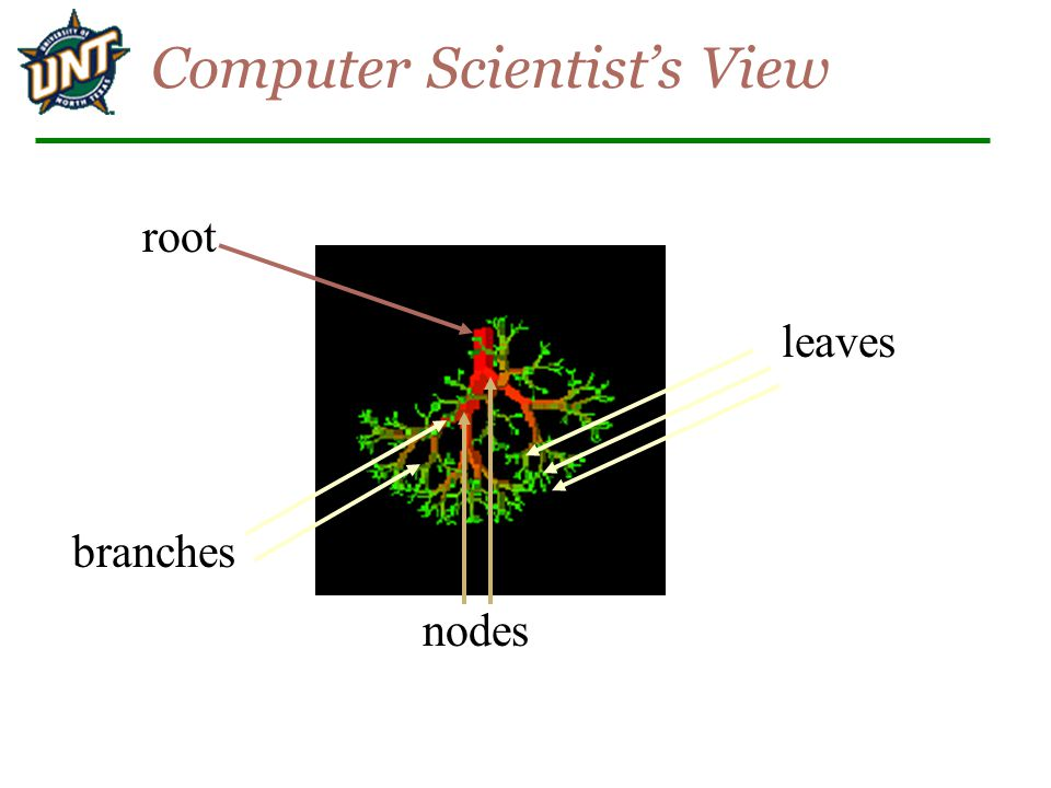 Computer Scientist's View