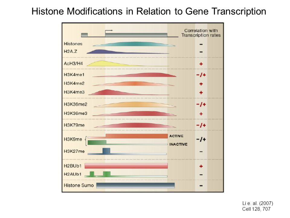 Histone Modifications in Relation to Gene Transcription