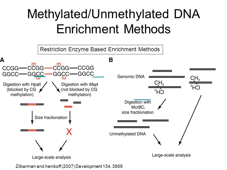 Methylated/Unmethylated DNA Enrichment Methods