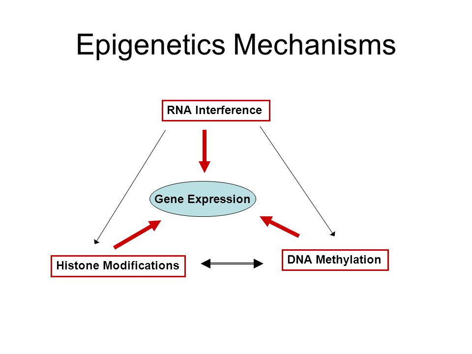 Epigenetics Mechanisms