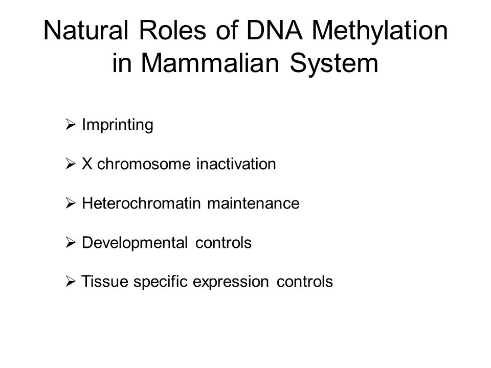 Natural Roles of DNA Methylation in Mammalian System
