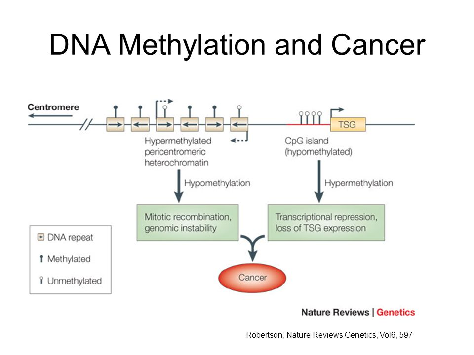 DNA Methylation and Cancer