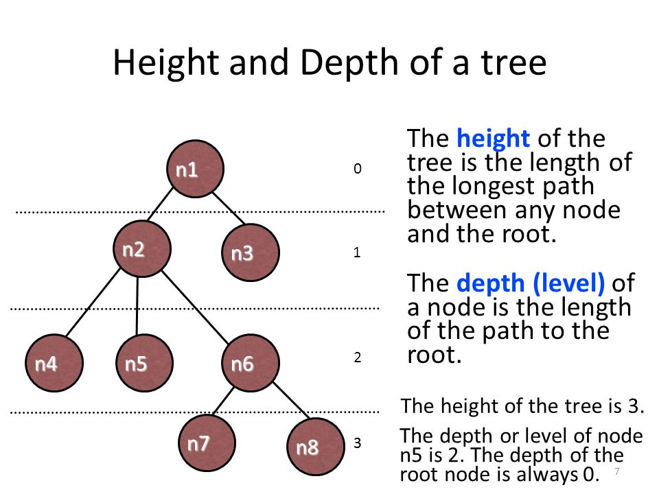 Height and Depth of a tree