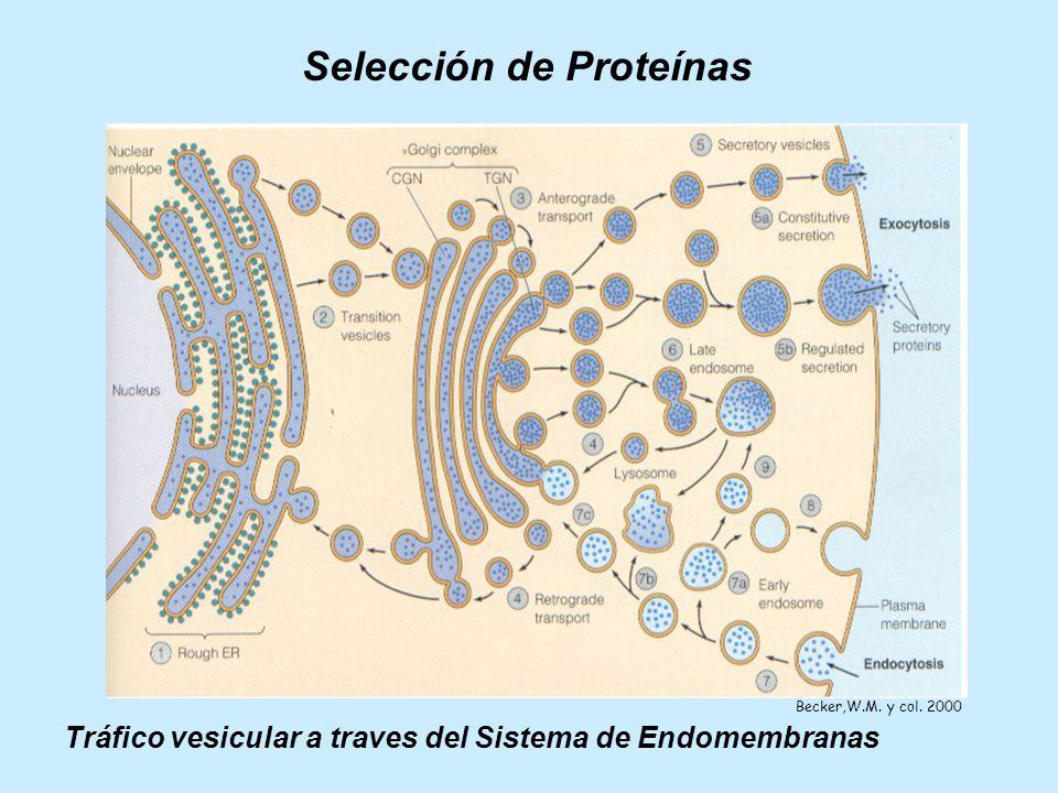 Selección de Proteínas