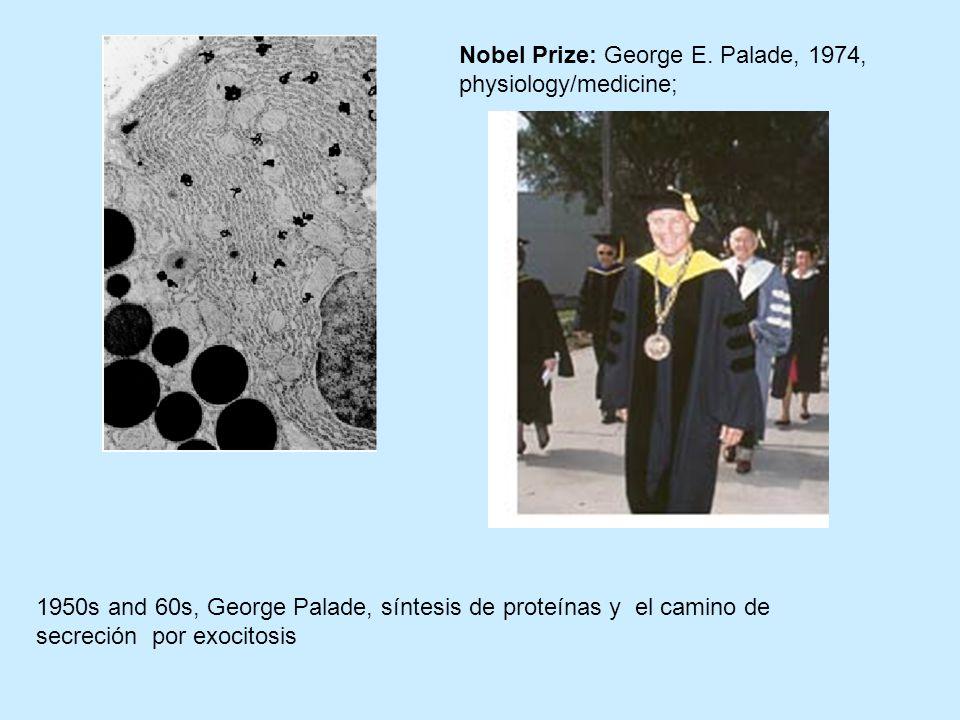 Nobel Prize: George E. Palade, 1974, physiology/medicine;