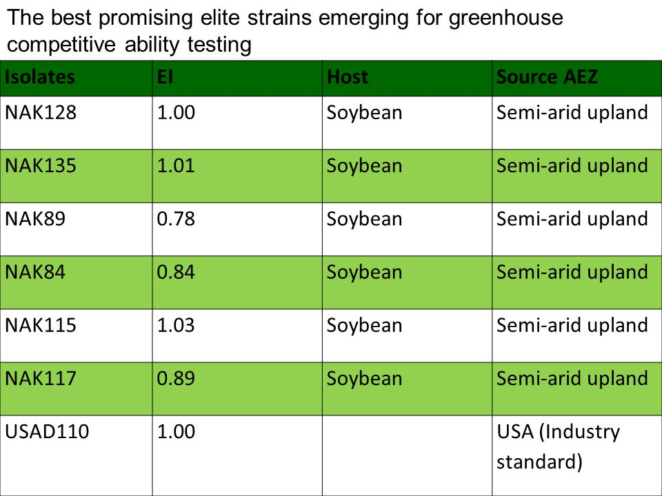 The best promising elite strains emerging for greenhouse competitive ability testing