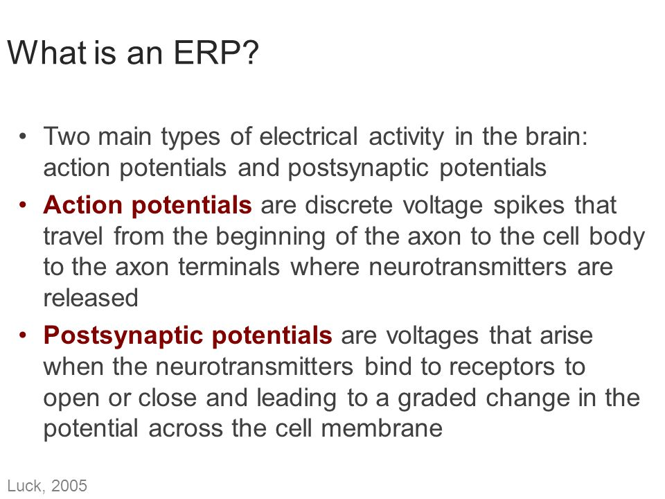 What is an ERP Two main types of electrical activity in the brain: action potentials and postsynaptic potentials.