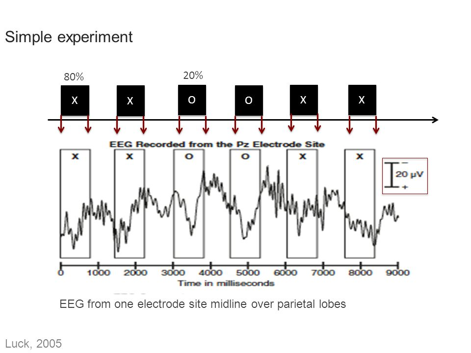 Simple experiment 80% 20% X X O O X X