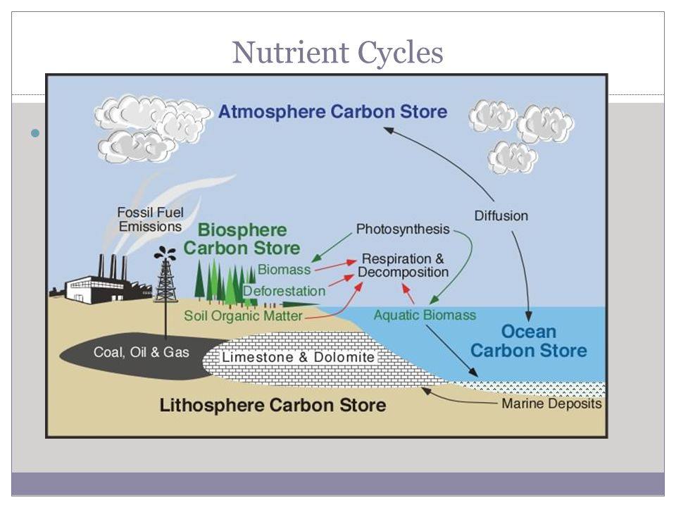 Nutrient Cycles Carbon Cycle