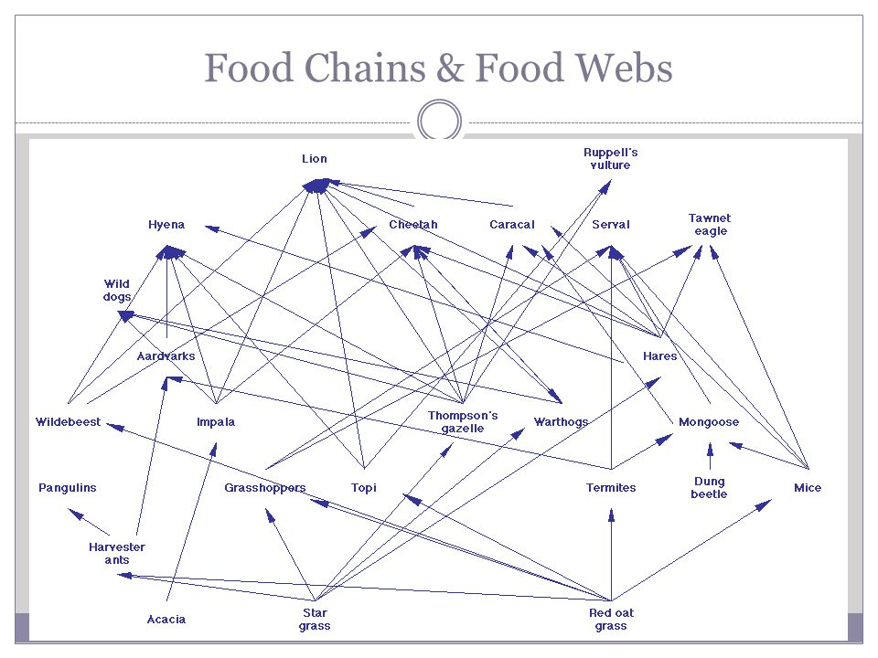 Food Chains & Food Webs Food Webs