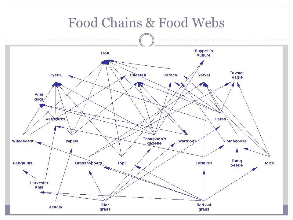 Food Chains & Food Webs Food Webs