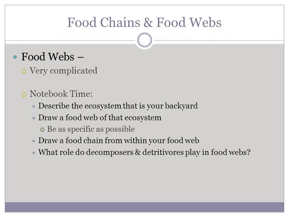 Food Chains & Food Webs Food Webs – Very complicated Notebook Time:
