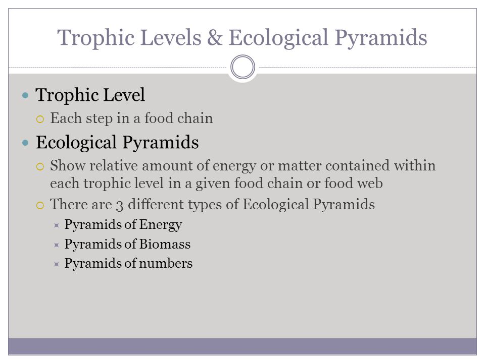Trophic Levels & Ecological Pyramids
