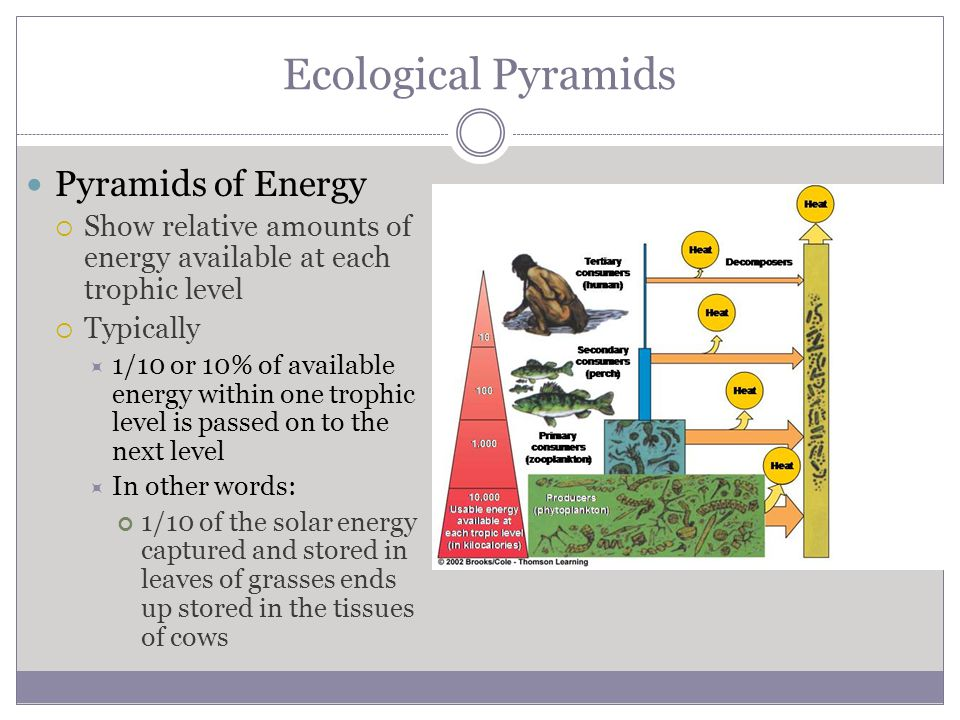 Ecological Pyramids Pyramids of Energy