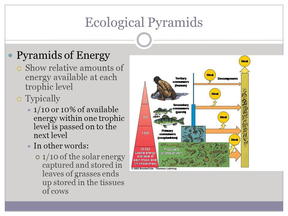 Ecological Pyramids Pyramids of Energy