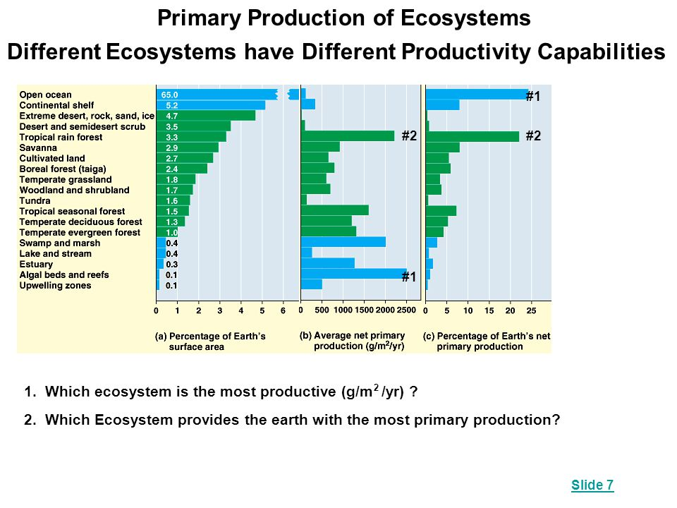 Primary Production of Ecosystems