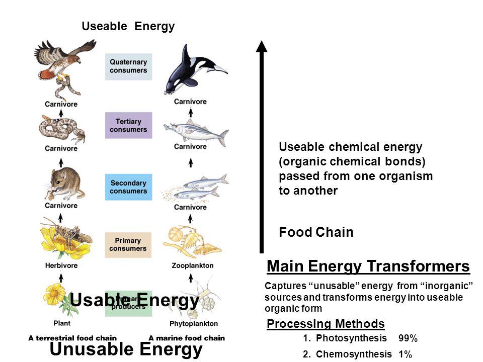 Usable Energy Unusable Energy Main Energy Transformers Food Chain