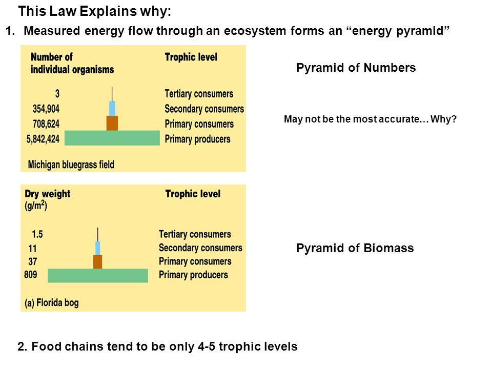 This Law Explains why: Measured energy flow through an ecosystem forms an energy pyramid Pyramid of Numbers.