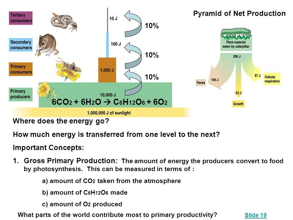 6CO2 + 6H2O  C6H12O6 + 6O2 Pyramid of Net Production 10% 10% 10%