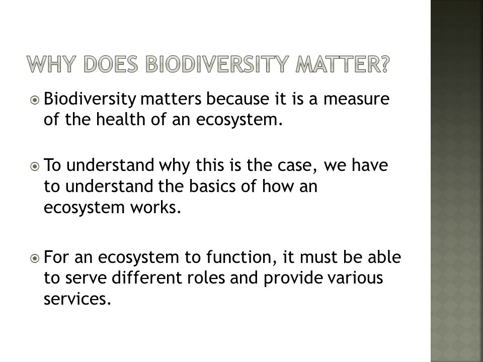 Why Does Biodiversity Matter