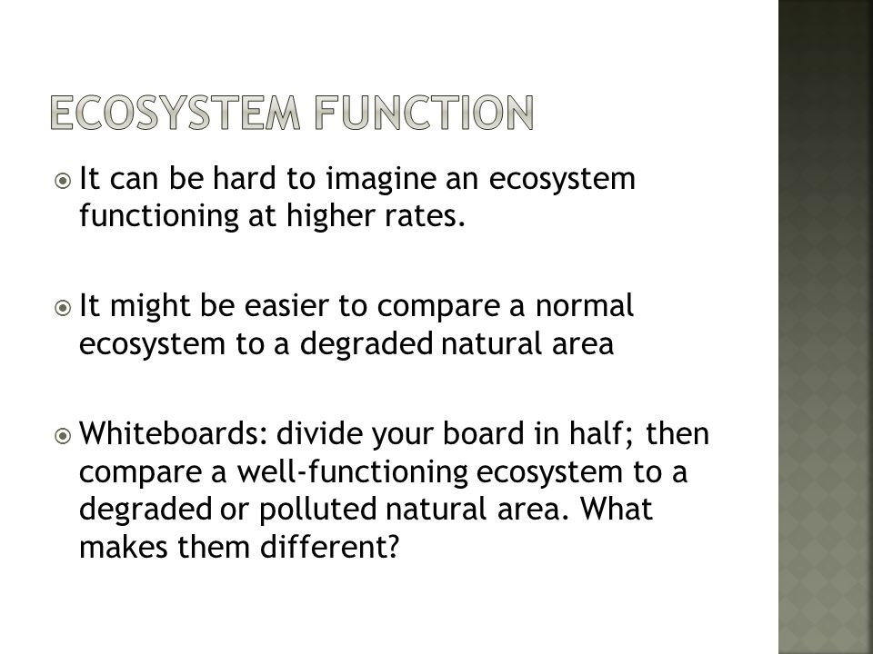 Ecosystem Function It can be hard to imagine an ecosystem functioning at higher rates.