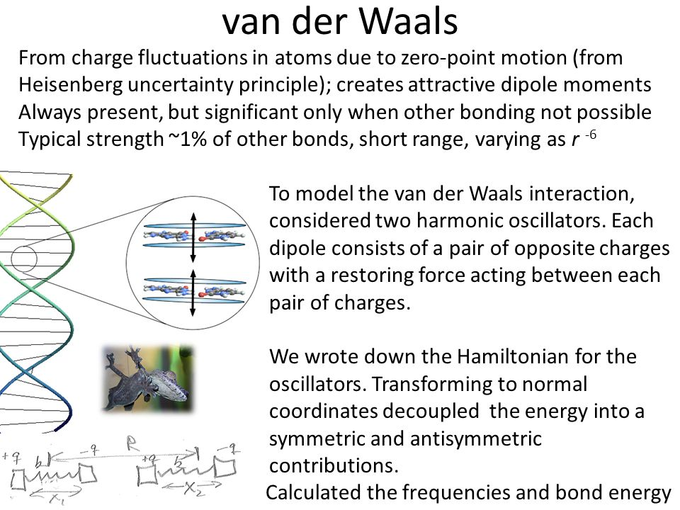 van der Waals From charge fluctuations in atoms due to zero-point motion (from Heisenberg uncertainty principle); creates attractive dipole moments.