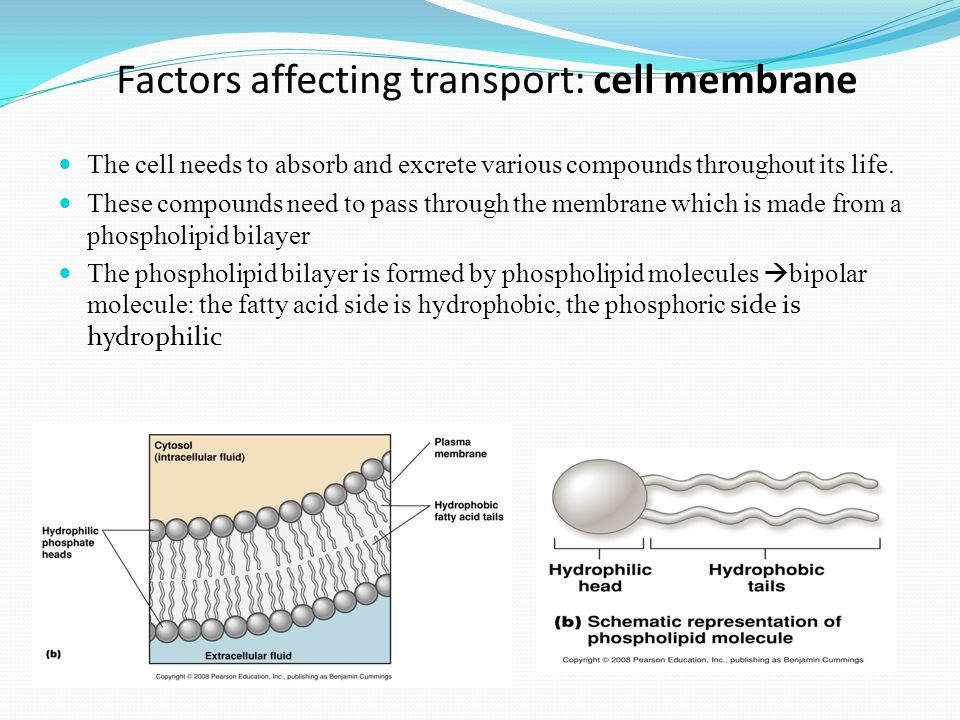 Factors affecting transport: cell membrane