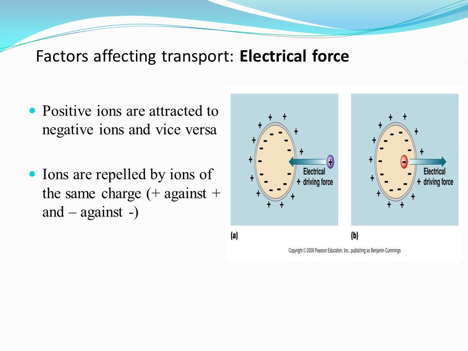 Factors affecting transport: Electrical force