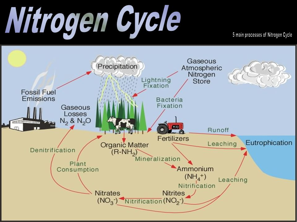 5 main processes of Nitrogen Cycle